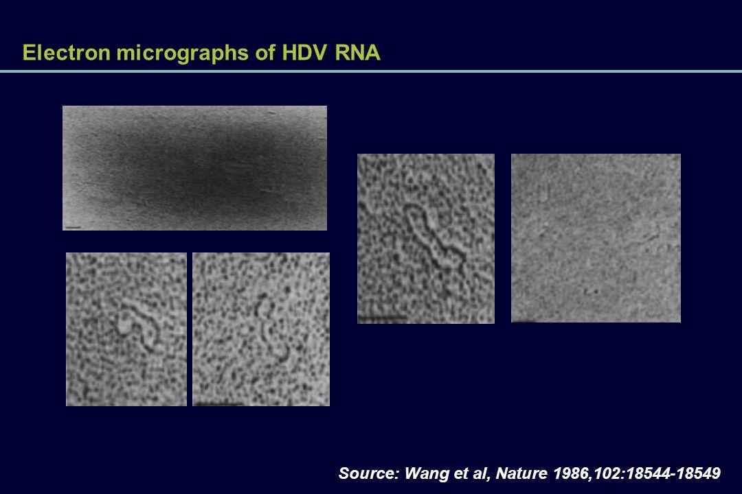 Electron micrographs of HDV RNA