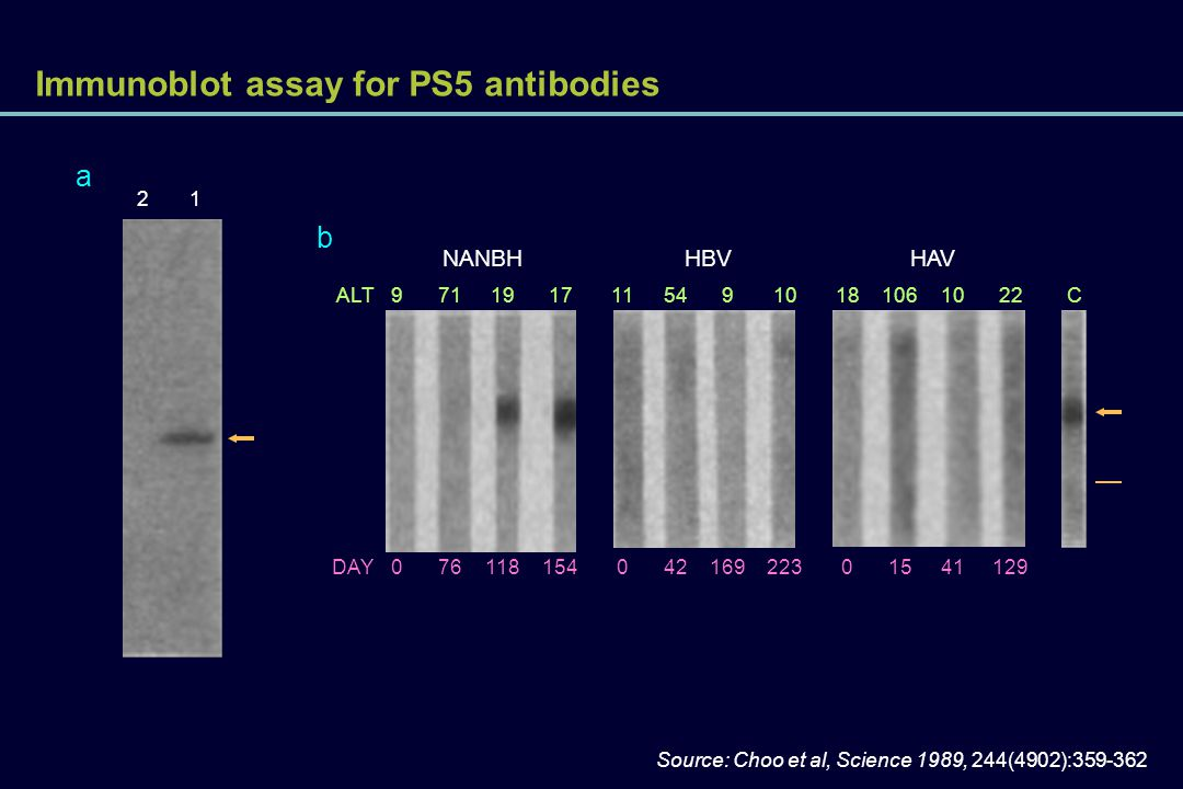 Immunoblot assay for PS5 antibodies