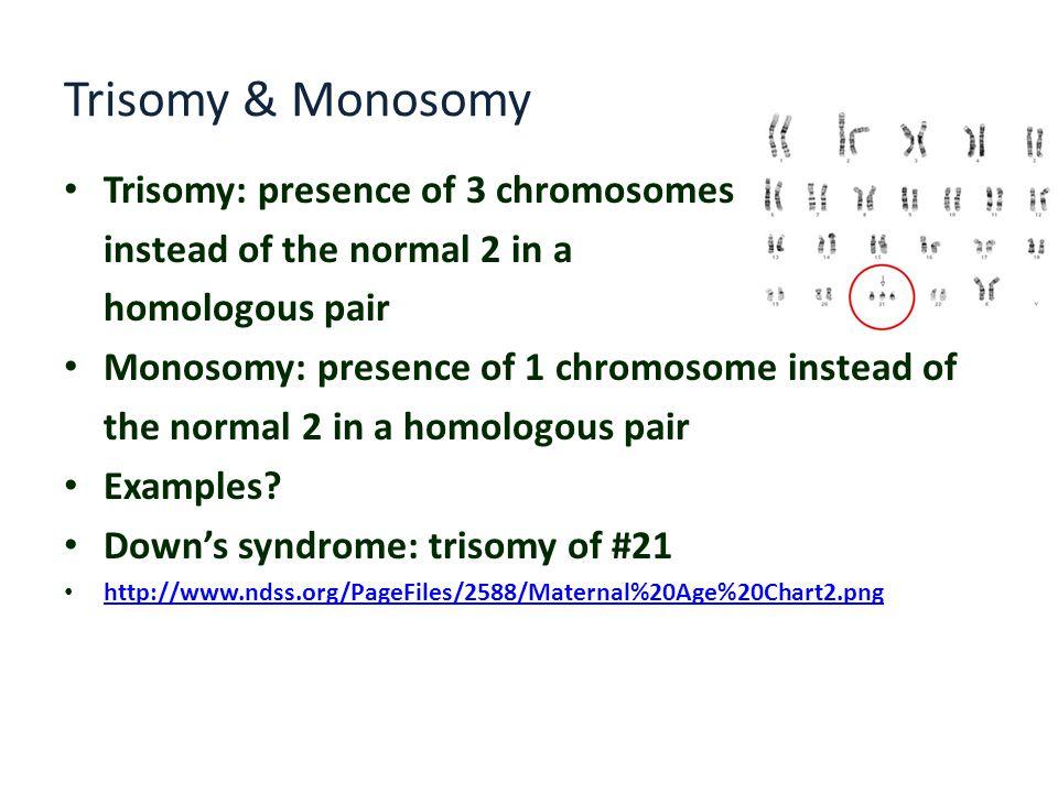 Trisomy & Monosomy Trisomy: presence of 3 chromosomes