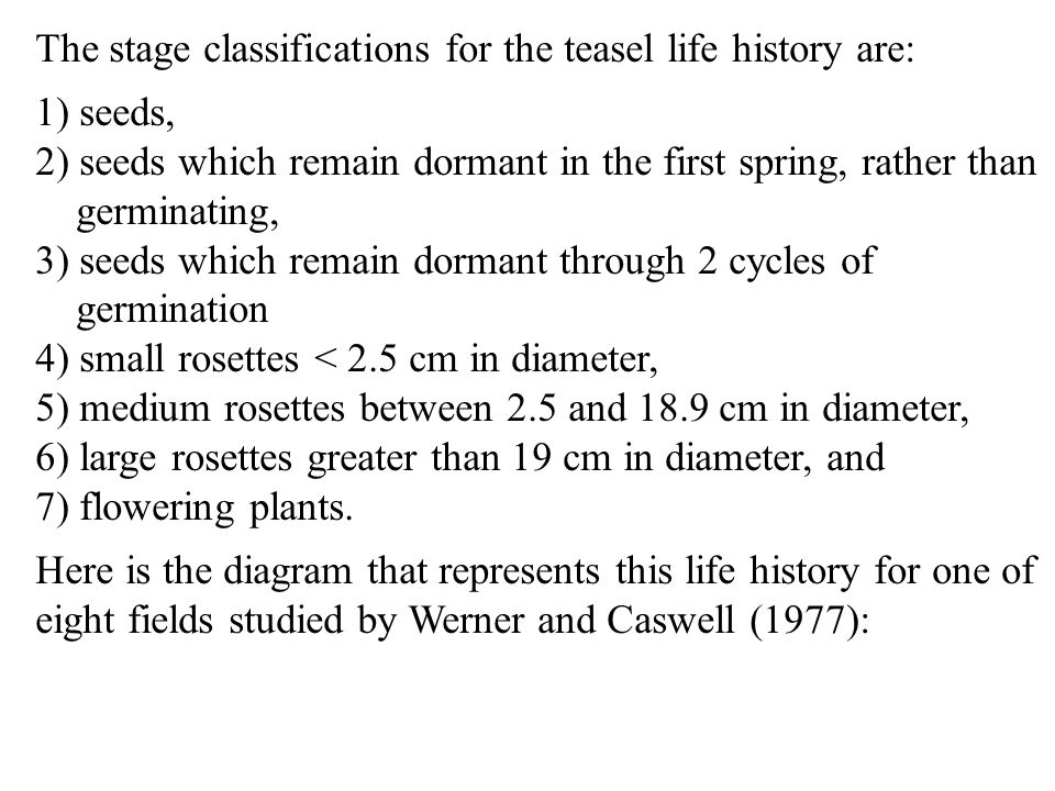The stage classifications for the teasel life history are: