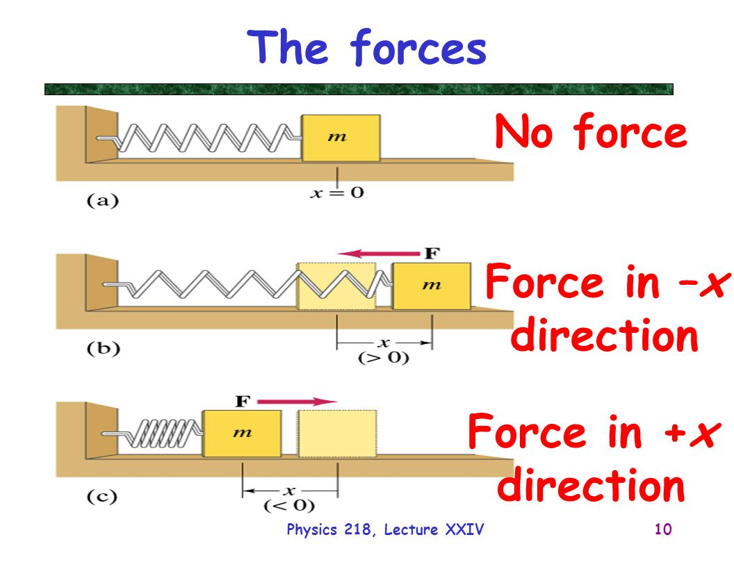 The forces No force Force in –x direction Force in +x direction