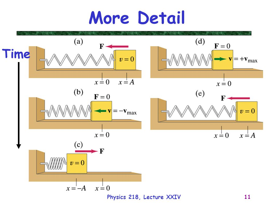 More Detail Time Physics 218, Lecture XXIV