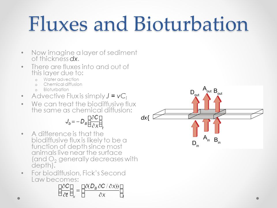 Fluxes and Bioturbation