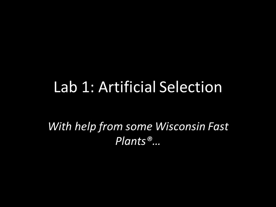 Lab 1: Artificial Selection