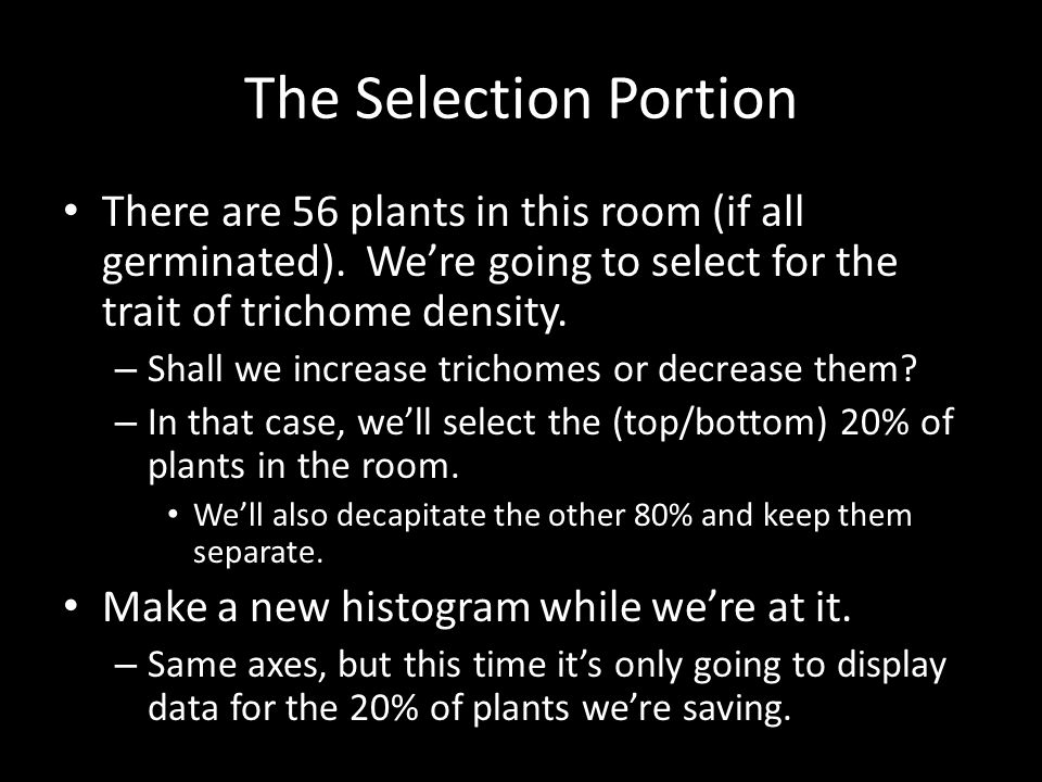 The Selection Portion There are 56 plants in this room (if all germinated). We're going to select for the trait of trichome density.