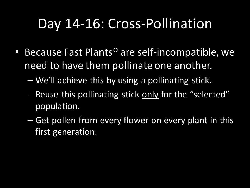 Day 14-16: Cross-Pollination