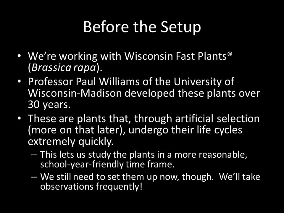 Before the Setup We're working with Wisconsin Fast Plants® (Brassica rapa).