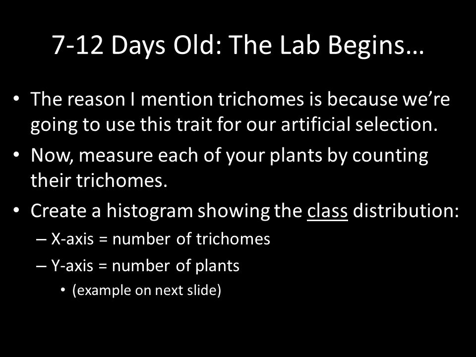 7-12 Days Old: The Lab Begins…