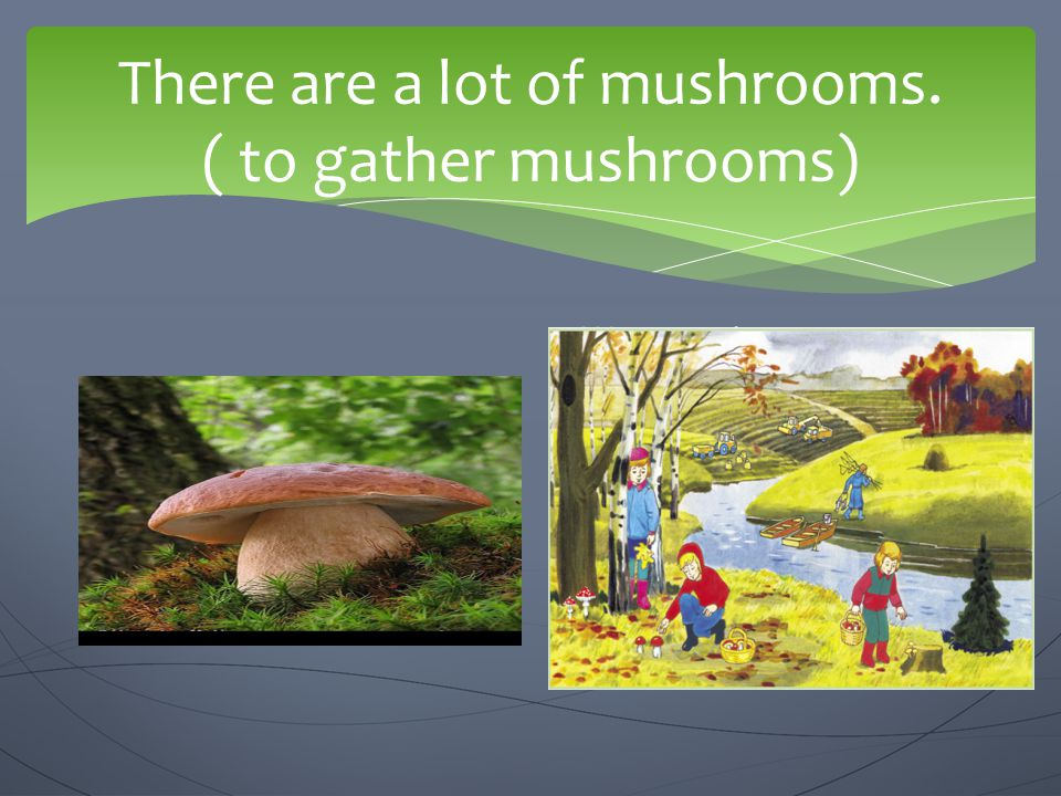 There are a lot of mushrooms. ( to gather mushrooms)