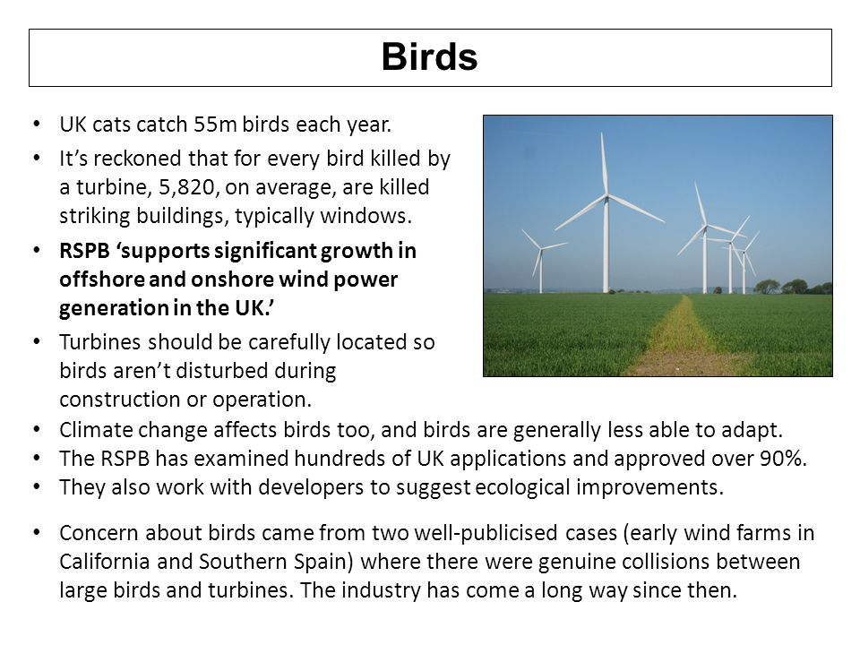 Birds UK cats catch 55m birds each year.