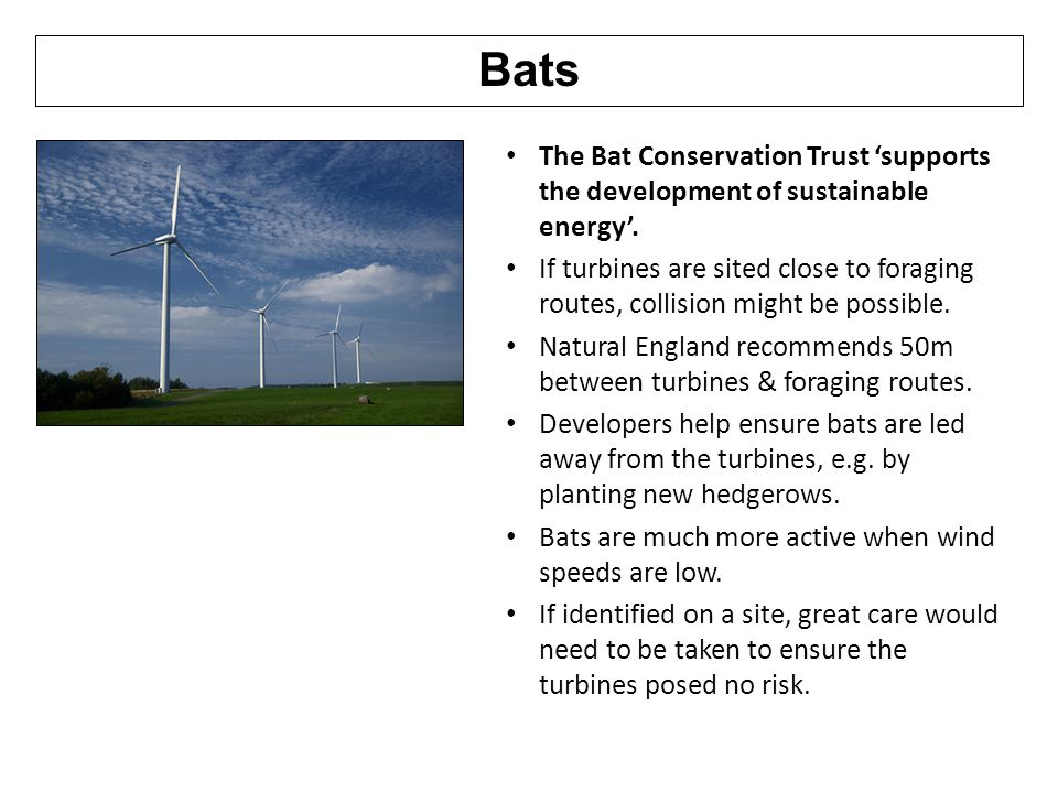 Bats The Bat Conservation Trust 'supports the development of sustainable energy'.