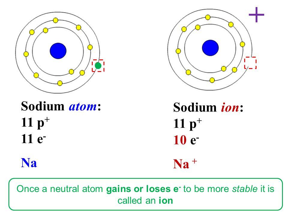 + Sodium atom: Sodium ion: 11 p+ 11 p+ 11 e- 10 e- Na Na +