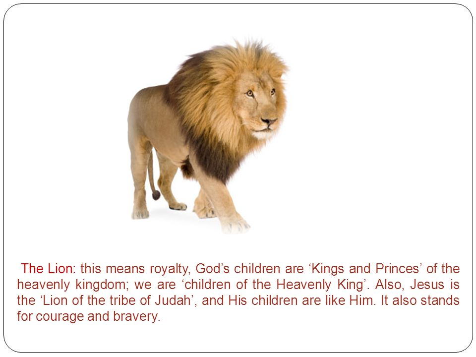 The Lion: this means royalty, God's children are 'Kings and Princes' of the heavenly kingdom; we are 'children of the Heavenly King'.