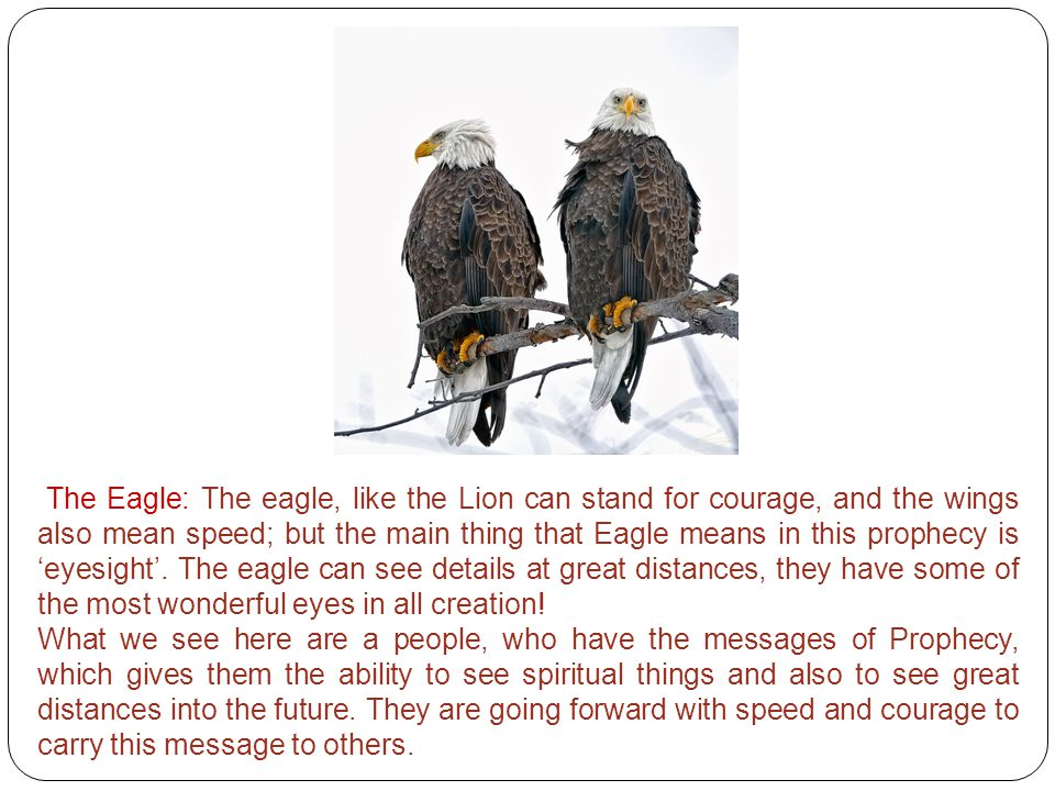 The Eagle: The eagle, like the Lion can stand for courage, and the wings also mean speed; but the main thing that Eagle means in this prophecy is 'eyesight'. The eagle can see details at great distances, they have some of the most wonderful eyes in all creation!
