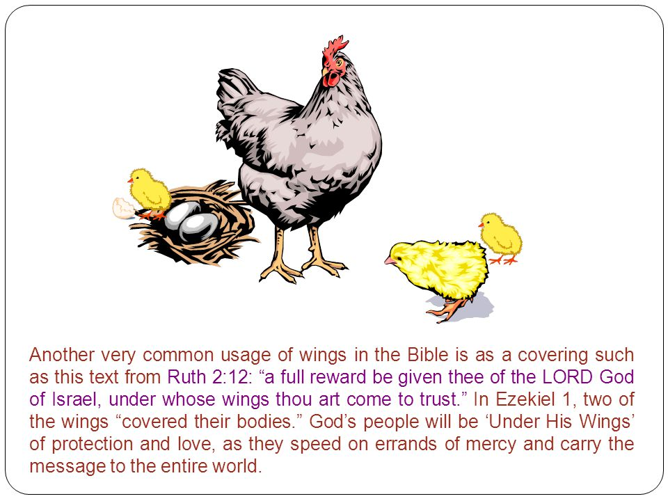 Another very common usage of wings in the Bible is as a covering such as this text from Ruth 2:12: a full reward be given thee of the LORD God of Israel, under whose wings thou art come to trust. In Ezekiel 1, two of the wings covered their bodies. God's people will be 'Under His Wings' of protection and love, as they speed on errands of mercy and carry the message to the entire world.