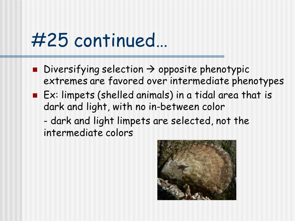 #25 continued… Diversifying selection  opposite phenotypic extremes are favored over intermediate phenotypes.