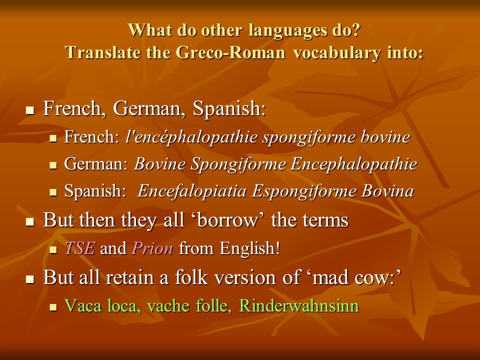 What do other languages do Translate the Greco-Roman vocabulary into: