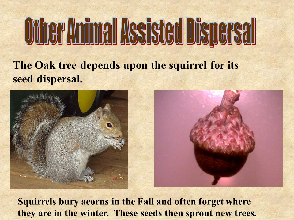 Other Animal Assisted Dispersal