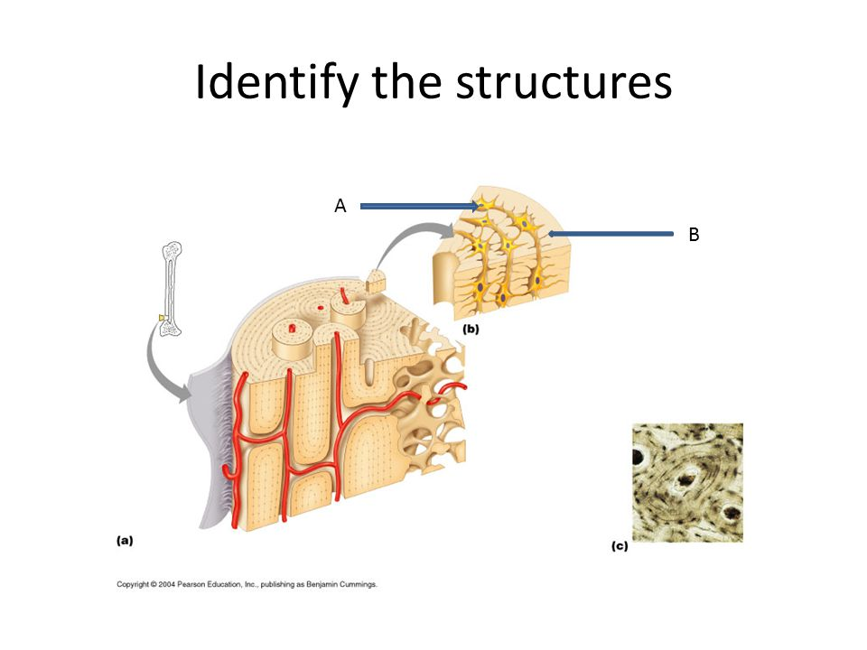 Identify the structures