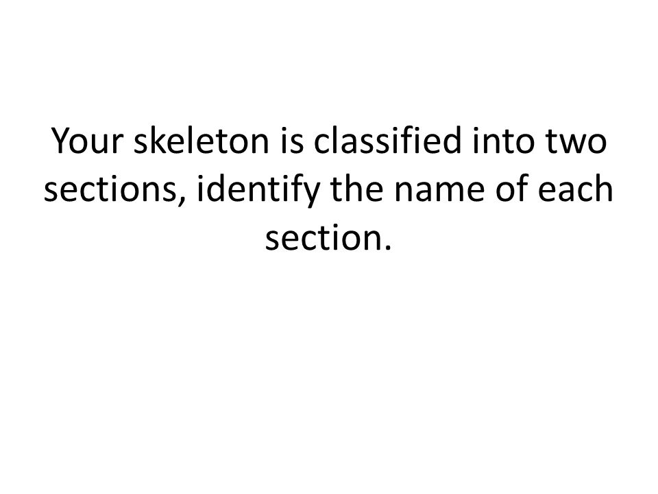 Your skeleton is classified into two sections, identify the name of each section.