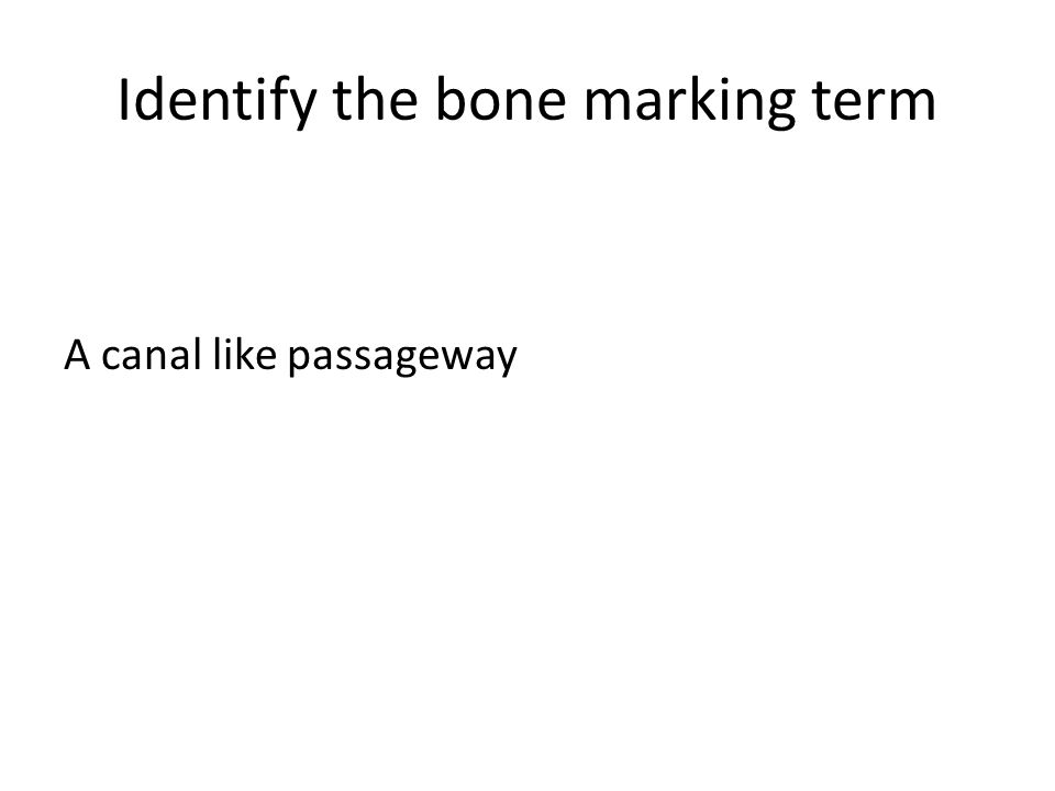 Identify the bone marking term