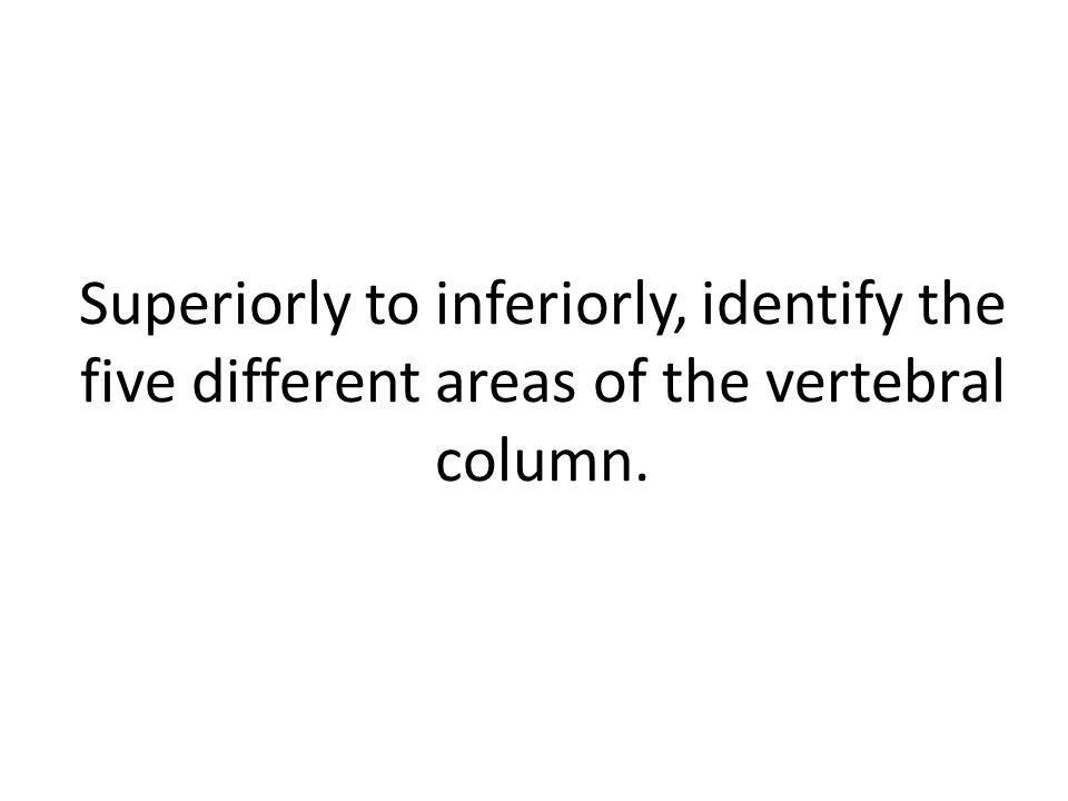 Superiorly to inferiorly, identify the five different areas of the vertebral column.