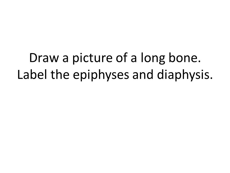 Draw a picture of a long bone. Label the epiphyses and diaphysis.