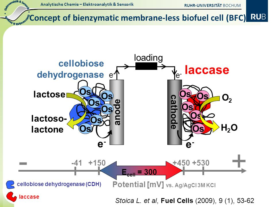 Concept of bienzymatic membrane-less biofuel cell (BFC)