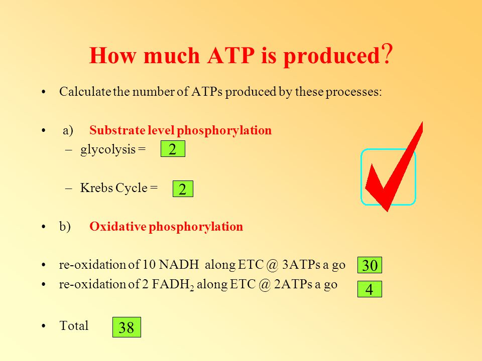 How much ATP is produced
