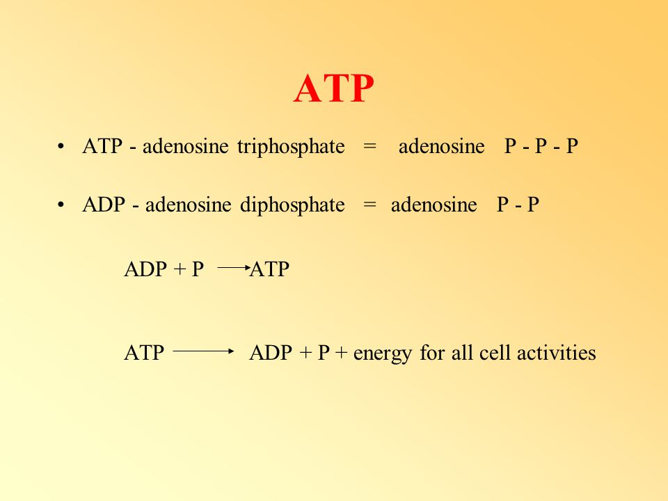 ATP ATP ADP + P + energy for all cell activities