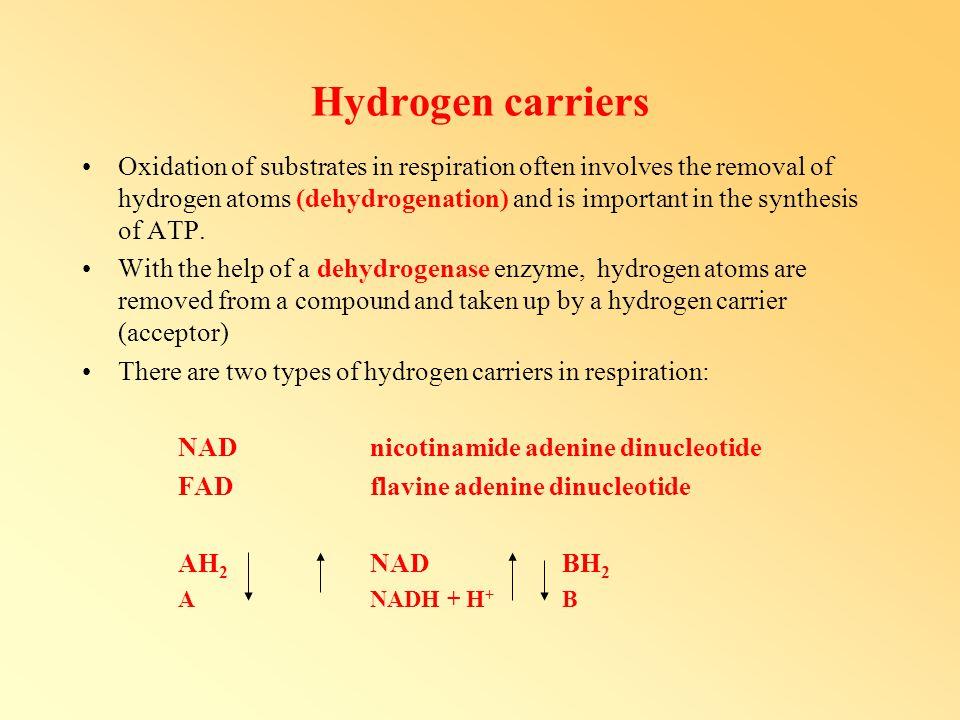 Hydrogen carriers