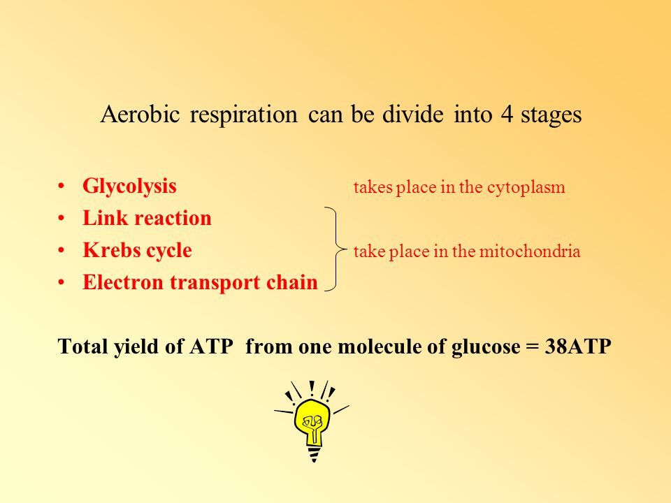 Aerobic respiration can be divide into 4 stages