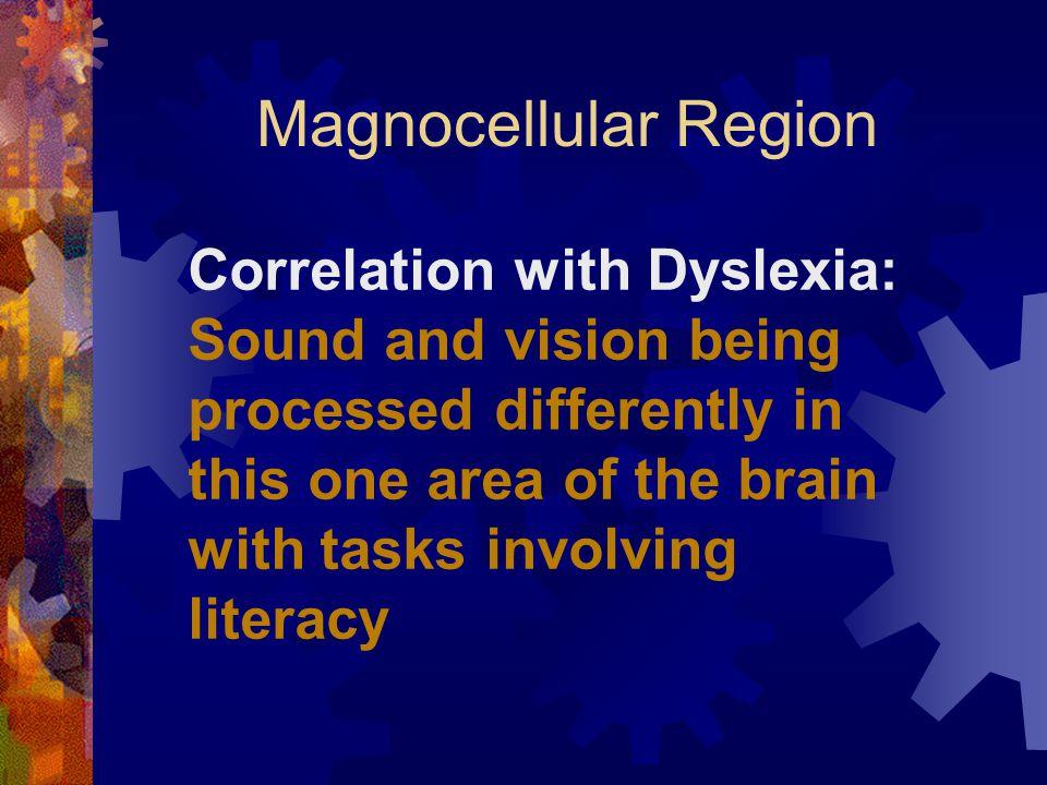 Magnocellular Region