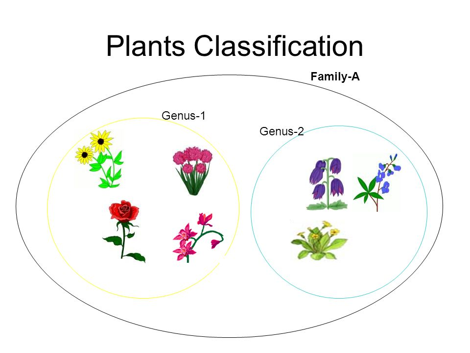 Plants Classification