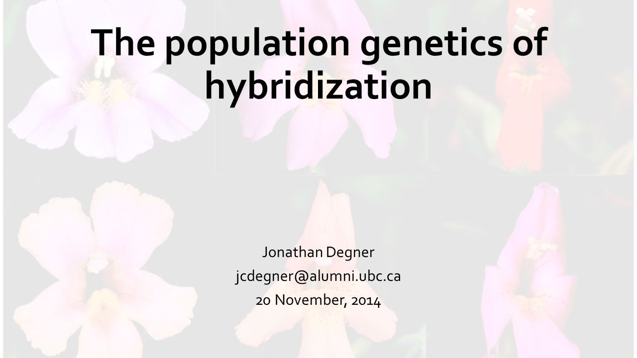 The population genetics of hybridization