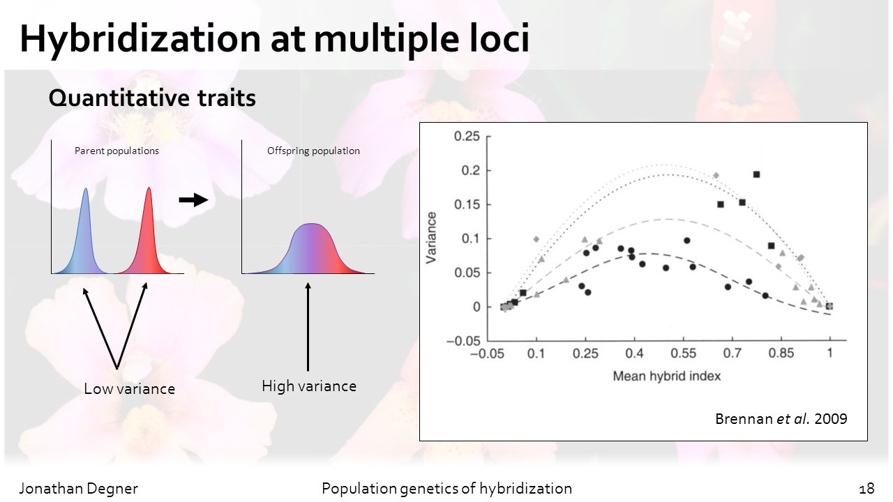 Hybridization at multiple loci