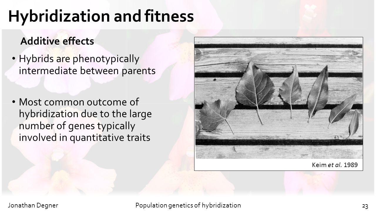 Hybridization and fitness