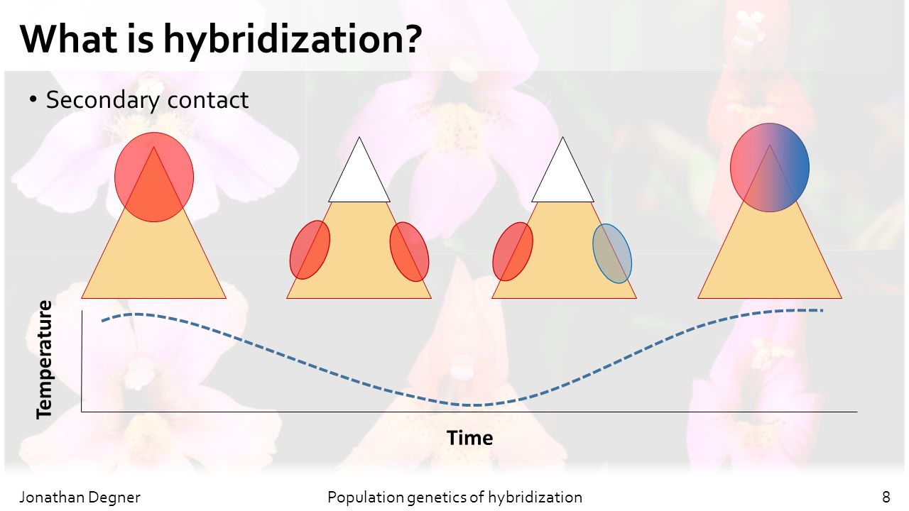 Population genetics of hybridization