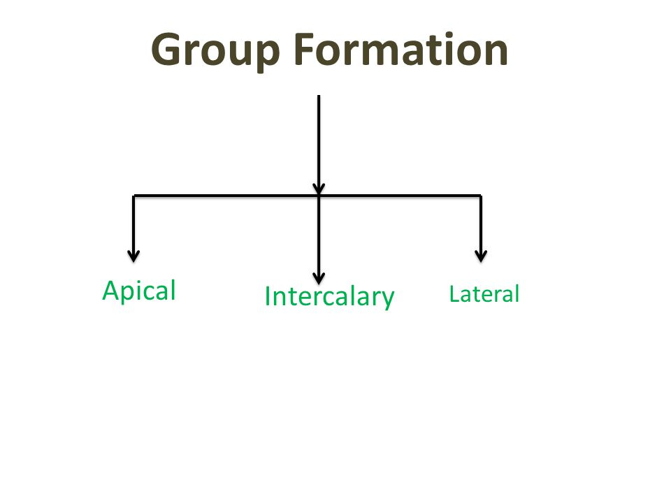 Group Formation Apical Intercalary Lateral
