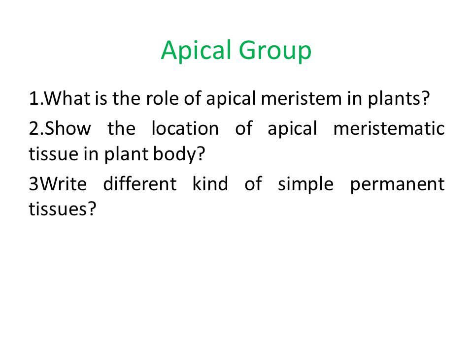 Apical Group