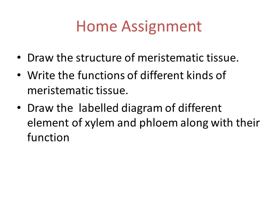 Home Assignment Draw the structure of meristematic tissue.