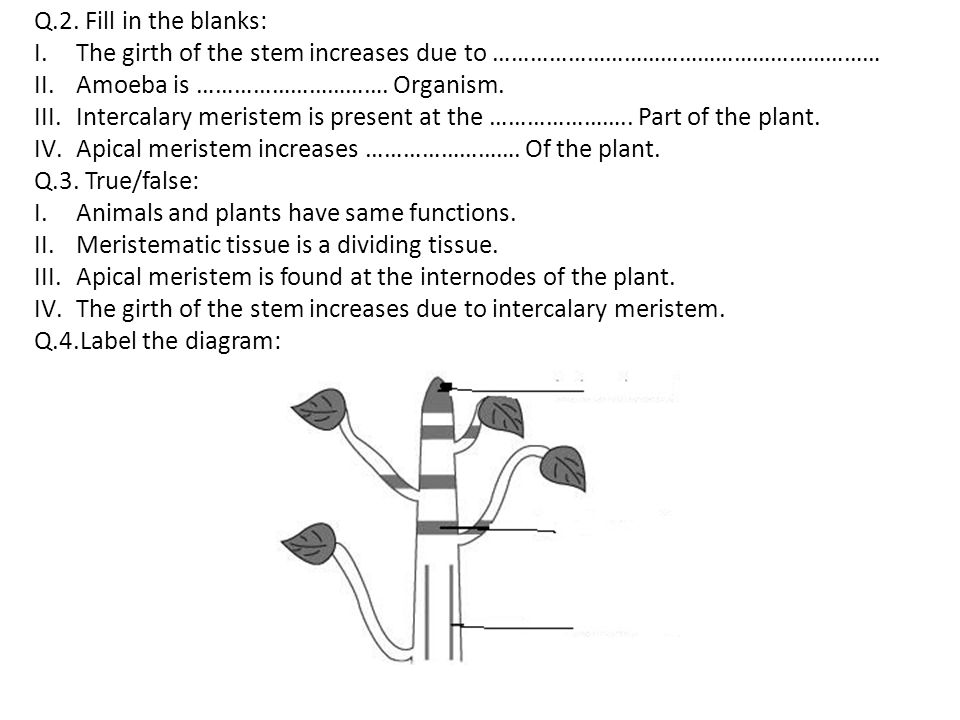 Q.2. Fill in the blanks: The girth of the stem increases due to ……………………………………………………… Amoeba is …………………………. Organism.