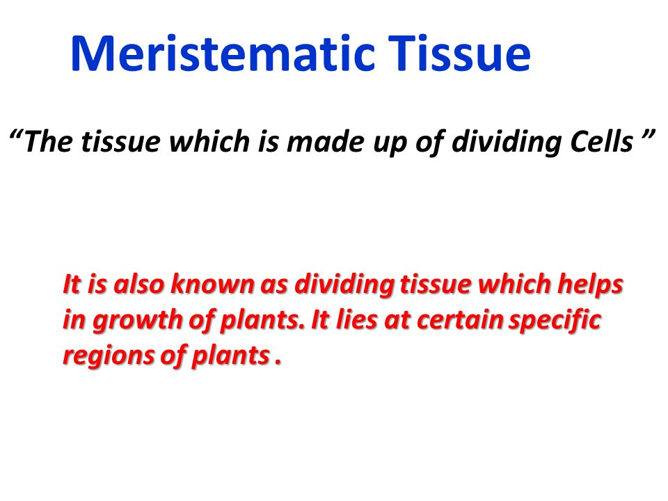 Meristematic Tissue The tissue which is made up of dividing Cells