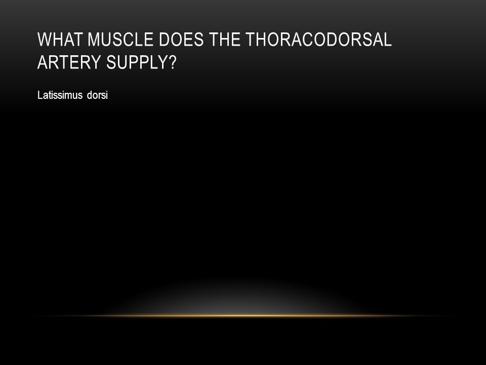 What muscle does the thoracodorsal artery supply