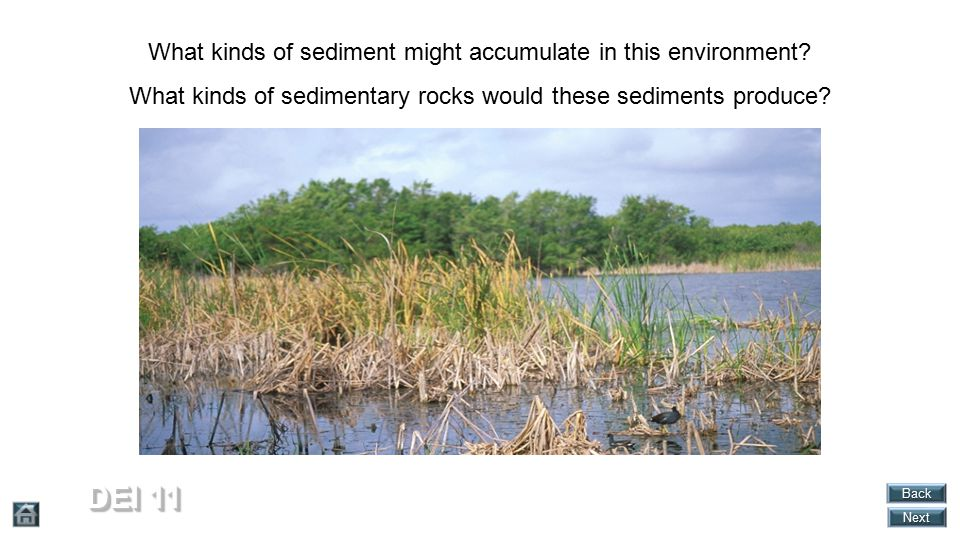 DEI 11 What kinds of sediment might accumulate in this environment