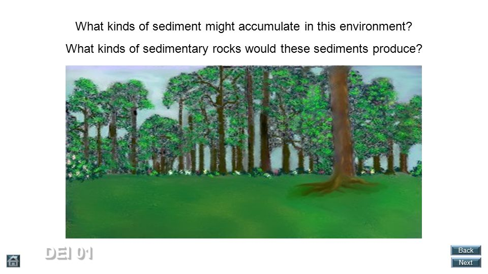 DEI 01 What kinds of sediment might accumulate in this environment