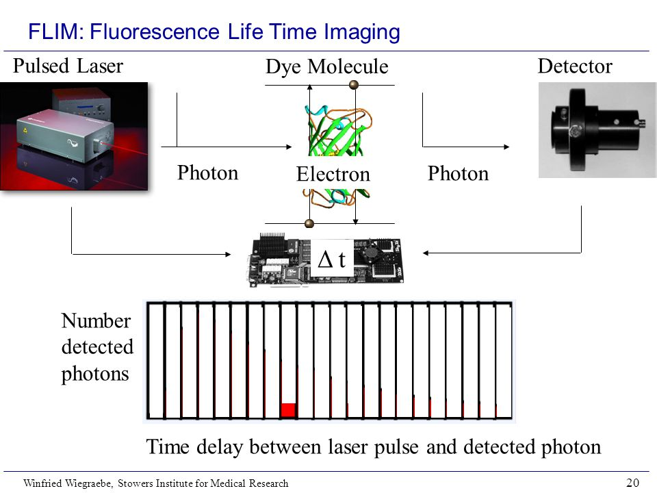 FLIM: Fluorescence Life Time Imaging