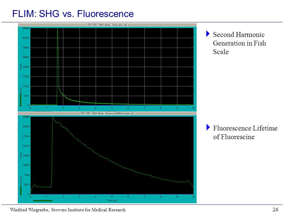FLIM: SHG vs. Fluorescence
