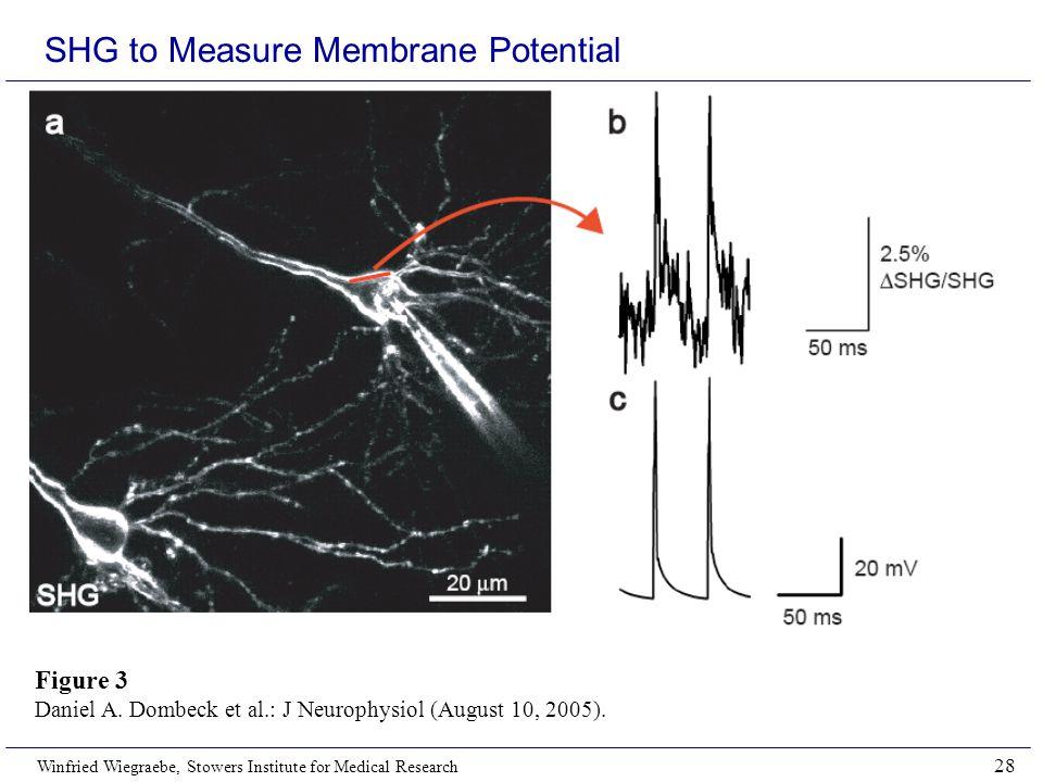 SHG to Measure Membrane Potential