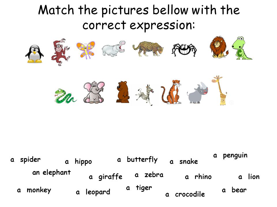 Match the pictures bellow with the correct expression:
